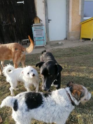Tomi/Tupac Lesencetomaj lebt glücklich in Österreich 11114