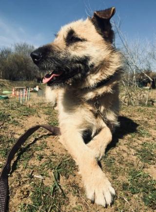 Balu Monor lebt glücklich in Ungarn 11689412
