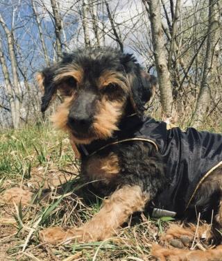 Milly Monor lebt glücklich in Ungarn 11731210