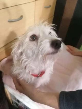 Blanca Monor lebt glücklich in Deutschland 12501710