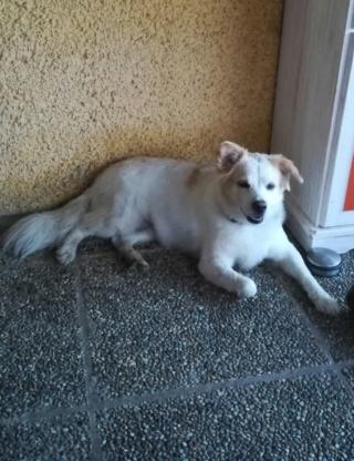 Lilly lebt jetzt glücklich in Österreich 133