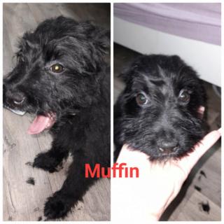 Muffin Monor lebt glücklich in Österreich 14341310