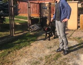 Tinka, Karmacs  lebt jetzt glücklich in Deutschland! 148