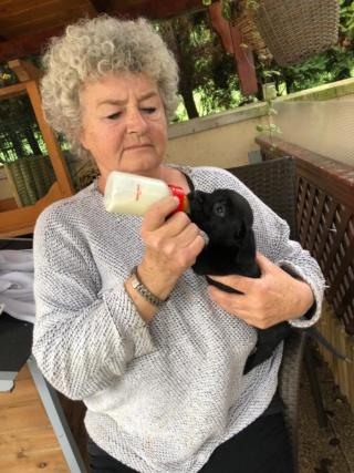 Istvan (I-Baby) Karmacs lebt jetzt glücklich in Deutschland 160