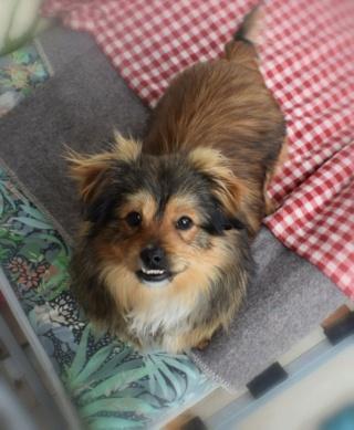 Pixie Erika lebt glücklich in Österreich 16062510