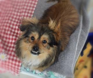 Pixie Erika lebt glücklich in Österreich 16091710