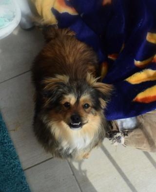 Pixie Erika lebt glücklich in Österreich 16093811