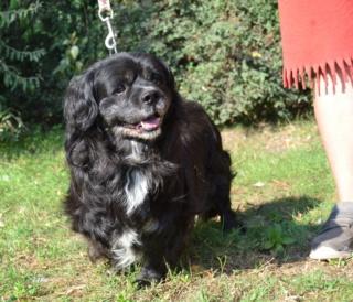 Jockey, Czevharaszt lebt glücklich in Deutschland 314