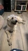 Loretta, Monor lebt jetzt glücklich in der Schweiz 339