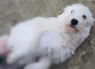 blue - Blue Karmacs lebt glücklich in Österreich 3d891610