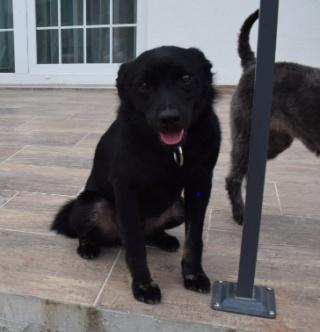 Jerry (schwarz)Monor lebt jetzt glücklich in Österreich 615