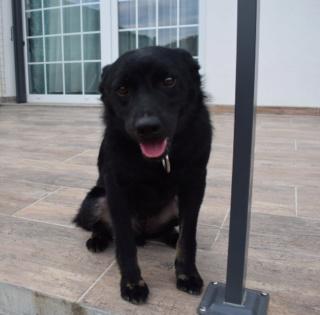 Jerry (schwarz)Monor lebt jetzt glücklich in Österreich 714