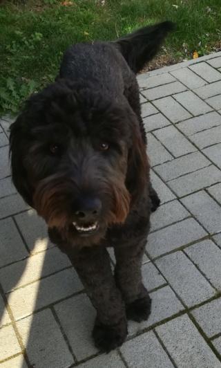 Shaka Karmacs lebt jetzt glücklich in Österreich D95cde10