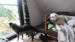 Obelix, Karmacs lebt jetzt glücklich in Deutschland Dsc_0115