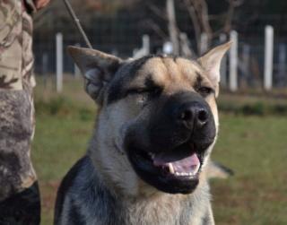 Marshall, Monor lebt glücklich in Ungarn Dsc_0160