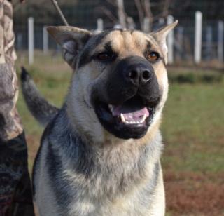 Marshall, Monor lebt glücklich in Ungarn Dsc_0162