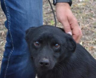 Jerry (schwarz)Monor lebt jetzt glücklich in Österreich Dsc_0181