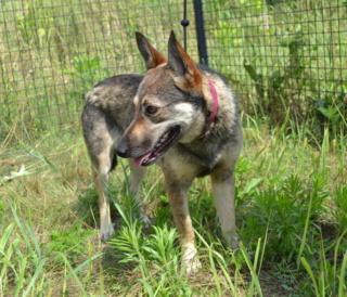 Fancsi Monor lebt glücklich in Ungarn Dsc_0599