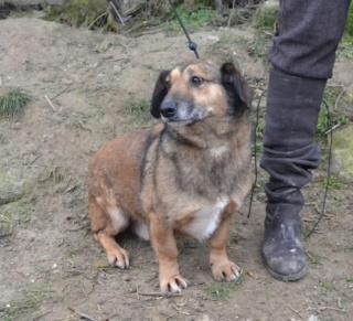 Cebea Monor/ Baracska lebt glücklcih in Deutschland Dsc_0838
