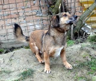Cebea Monor/ Baracska lebt glücklcih in Deutschland Dsc_0843