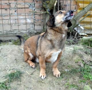 Cebea Monor/ Baracska lebt glücklcih in Deutschland Dsc_0845