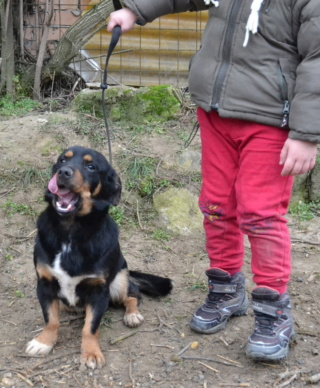 Till Monor/Lesencetomaj lebt glücklich in Deutschland Dsc_0868