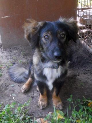 Speedy Hajduszoboszlo lebt glücklich in Ungarn Dscn2110