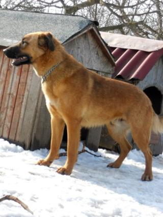 Nash, Hajduszoboszlo Dscn5630