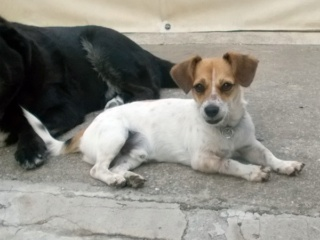 Sebi / Zsebi, Hajduszoboszlo lebt jetzt glücklich in Österreich Dscn6029