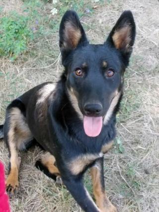 Kiara, Hajduszoboszlo lebt jetzt glücklich in Deutschland Dscn6610