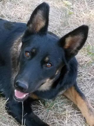 Kiara, Hajduszoboszlo lebt jetzt glücklich in Deutschland Dscn6615