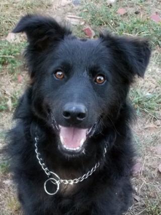 Riley, Hajduszoboszlo lebt jetzt glücklich in Deutschland Dscn7021