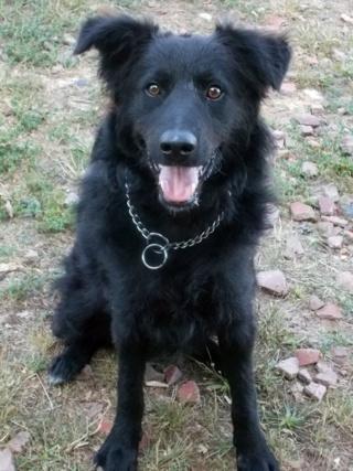 Riley, Hajduszoboszlo lebt jetzt glücklich in Deutschland Dscn7022