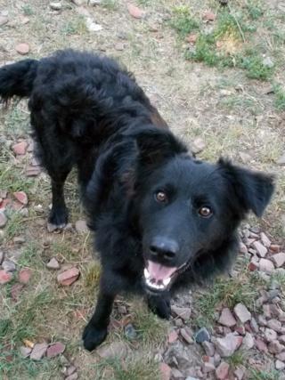 Riley, Hajduszoboszlo lebt jetzt glücklich in Deutschland Dscn7023