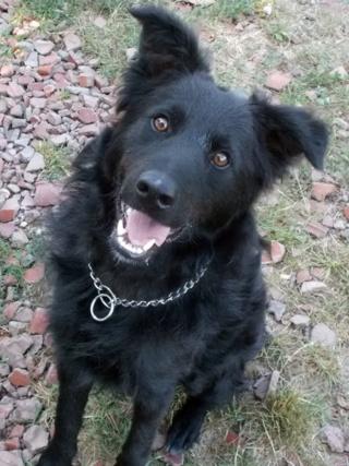 Riley, Hajduszoboszlo lebt jetzt glücklich in Deutschland Dscn7024