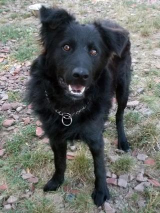 Riley, Hajduszoboszlo lebt jetzt glücklich in Deutschland Dscn7025