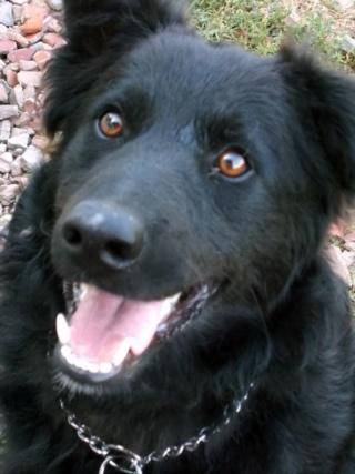 Riley, Hajduszoboszlo lebt jetzt glücklich in Deutschland Dscn7026