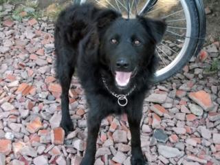 Riley, Hajduszoboszlo lebt jetzt glücklich in Deutschland Dscn7027