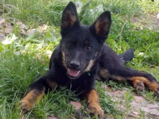 Kiara, Hajduszoboszlo lebt jetzt glücklich in Deutschland Dscn7910