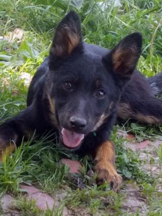 Kiara, Hajduszoboszlo lebt jetzt glücklich in Deutschland Dscn7911