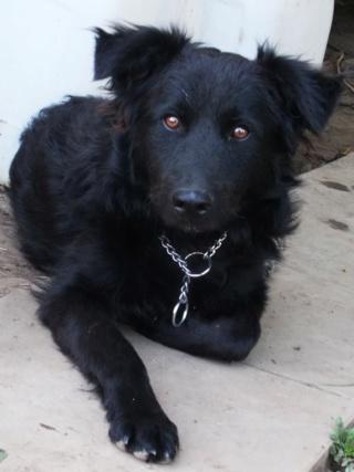 Riley, Hajduszoboszlo lebt jetzt glücklich in Deutschland Dscn8010