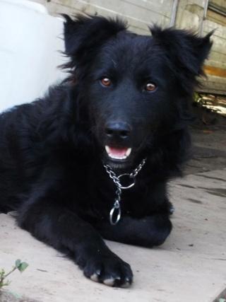 Riley, Hajduszoboszlo lebt jetzt glücklich in Deutschland Dscn8011