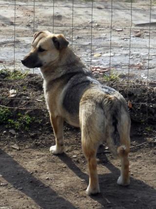 Joy,Hajduszoboszlo Dscn9318