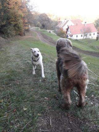 Athos, Bogancs lebt jetzt glücklich in Österreich Img-2145