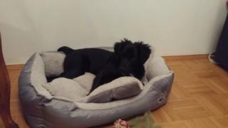 ZULU, (Z Baby) Karmacs lebt jetzt glücklich in Österreich! Img-2148