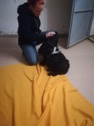 Tibsy /Luna (von Joya) PS Steiermark lebt jetzt glücklich in Österreich Img-2173