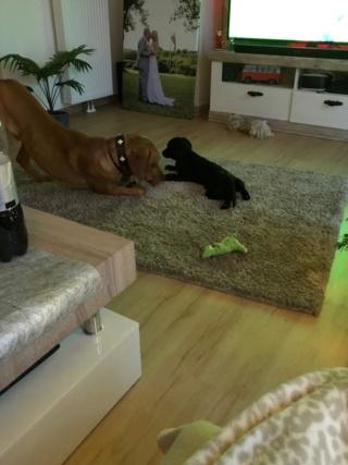 Istvan (I-Baby) Karmacs lebt jetzt glücklich in Deutschland Img-2214