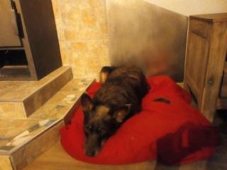 Csoki, Monor lebt jetzt glücklich in Österreich Img-2259