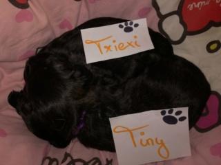 Trixie (von Joya) PS Tan lebt jetzt glücklich in Österreich Img-2267