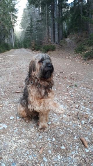 Athos, Bogancs lebt jetzt glücklich in Österreich Img-2516